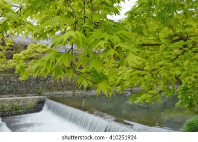 Green leaves Japanese maple and waterfall background