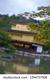 the green leaves with Kinkaku-ji as background. Kinkaku-ji (Temple of the Golden Pavilion) is a Zen Buddhist temple in Kyoto, Japan. most popular buildings in Japan, also world heritage