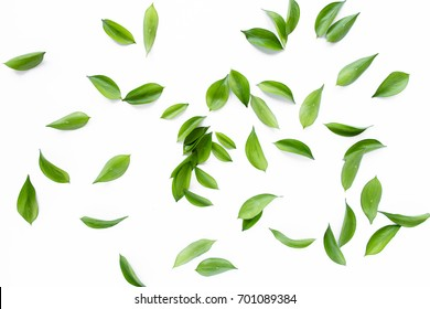 Green leaves, leaf branches on white background. flat lay, top view
