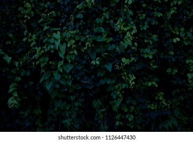 green leaves with low contrast dark tone tropical style background
