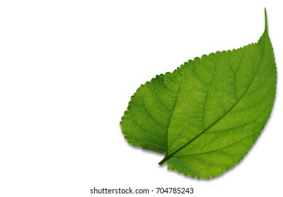 Green leaves are made into the background, Template and concept