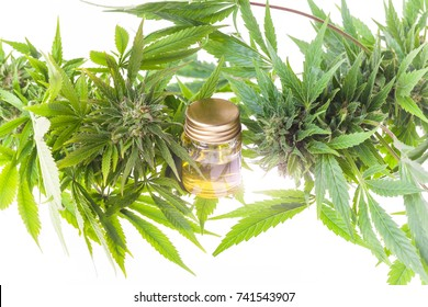 Green leaves of medicinal cannabis with extract oil . alternative medicine