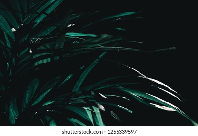green leaves in modern dark tone style