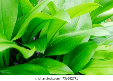 green leaves in the morning nature background