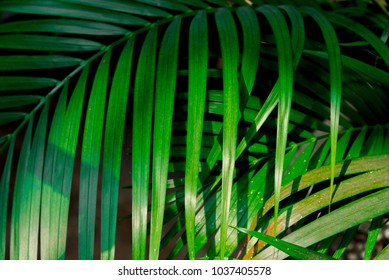 Green Leaves Nature Background With Shadow In The Park