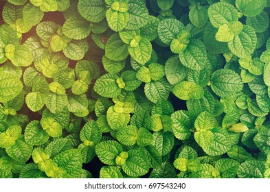 Green Leaves Nature Background Wallpaper