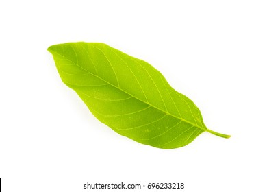 Green leaves nature on white background