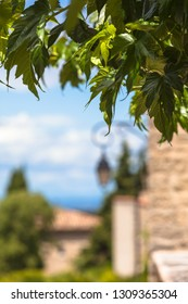 Green leaves and old french village background (copy space)