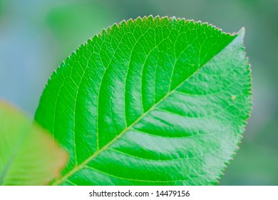 Green leaves on a background of the different plants. A background on a theme about seasonal changes.