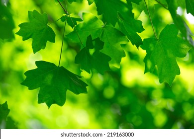 green leaves on the green backgrounds