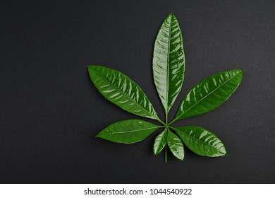 green leaves on black background