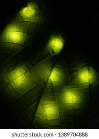 Green leaves on black background with light spots