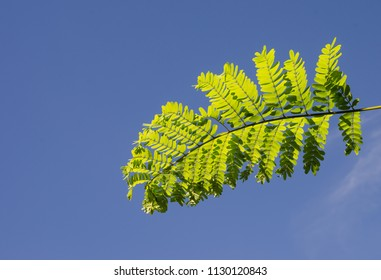 green leaves on blue sky background