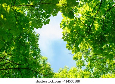 Green leaves on blue sky background with cloud. Natural Background