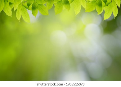 Green leaves on bokeh background and sun light with coppy space for text ,Template mock up and display of product. green nature and ecology concept.