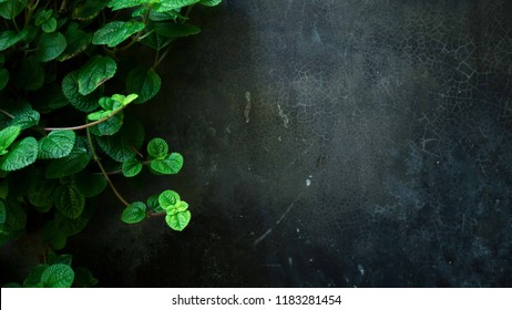 green leaves on dark cement texture in the garden for natural concept background