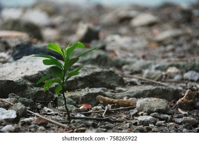 Green leaves on the ground