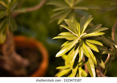 Green leaves on potted plants with green grass background at noon