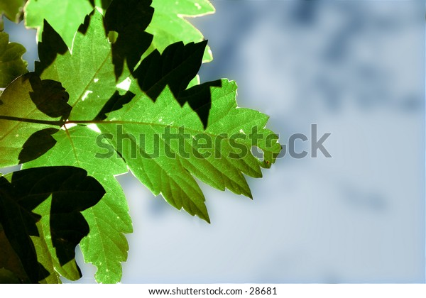 green leaves on the side