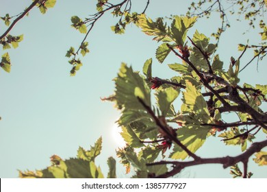 Green leaves on sunshine background. Closeup view
