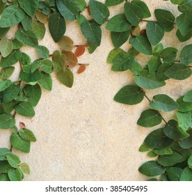 Green Leaves On The Wall background.