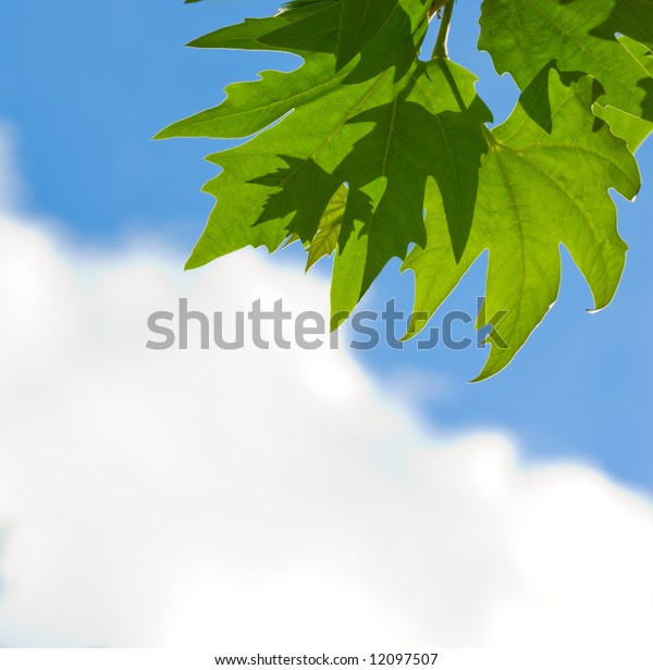 green leaves over blue sky background