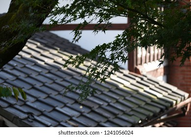 Green leaves over a Japanese ryokan rooftop