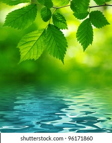 Green leaves over the water