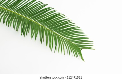 Green leaves palm isolated on white.