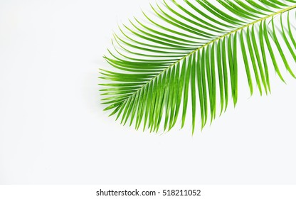 Green leaves palm isolated on white , green leaves palm from tropical.