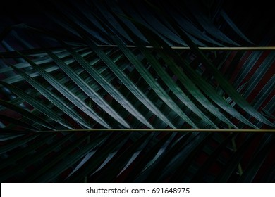 Green leaves Palm texture background Blue tone dark  at phuket Thailand