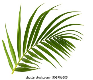 Green leaves of palm tree isolated on white background - Shutterstock ID 501906805