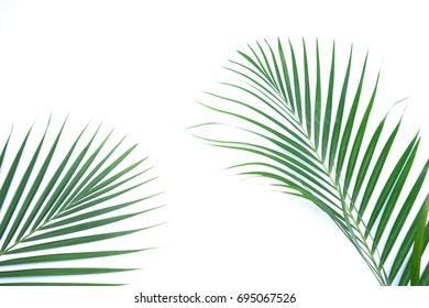 Green leaves of palm tree isolated on white background