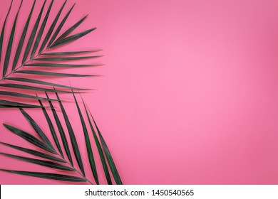 Green leaves of palm tree on bright pink pastel background, Tropical green palm leaves , Top view minimal concept. Flat lay.