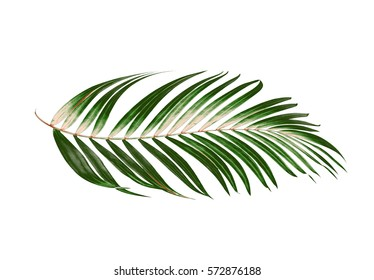 palm leaf images  stock photos   vectors shutterstock black and white flower clip art free images black and white flower clip art stationery