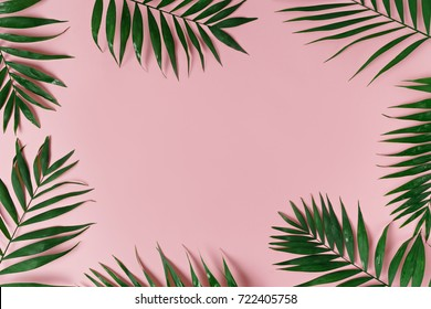 green leaves of palm tree on bright background  - Shutterstock ID 722405758