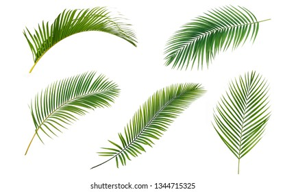 Green leaves palms collection isolated on white background.