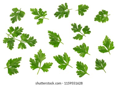 Green leaves of parsley isolated on white, top view.