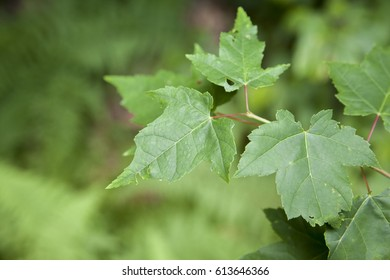 Green leaves, part of tree in forrest area