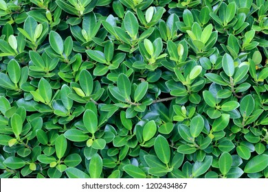 Green leaves pattern background, Natural background