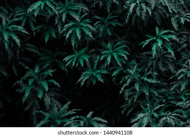 Green leaves pattern background, Natural background and wallpaper