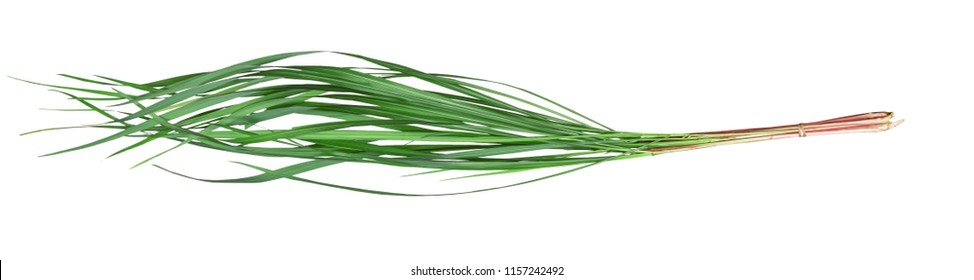 Green leaves pattern of Cymbopogon nardus isolated on white background