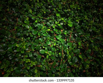 Green leaves pattern texture background.