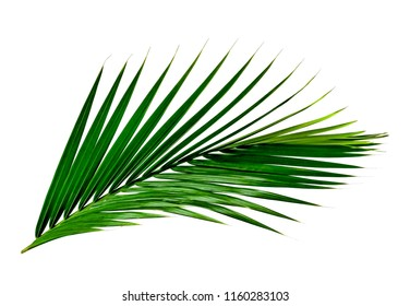 Green leaves pattern,leaf palm tree isolated on white background