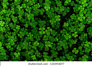 Green leaves pattern,leaf Shamrock or water clover background