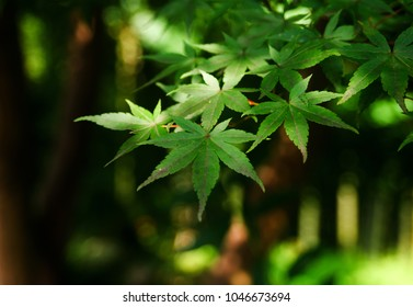 Green leaves of  plant growing in the wild, on dark background.