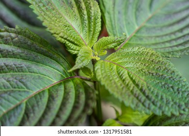 Green leaves of a plant on blurry background.