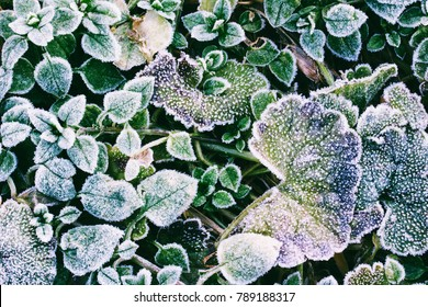 green leaves of plants covered with frost top view