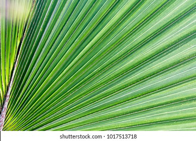 green leaves of plants in detail