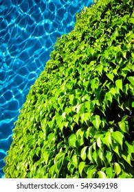 Green leaves at the pool